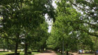 矢橋帰帆島公園の風景写真