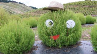 びわこ箱館山も園芸の画像